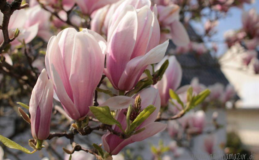 Frühlingsschätze