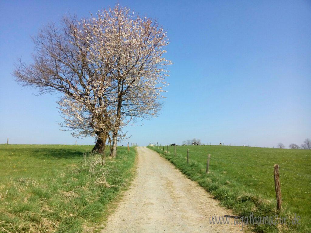 11 Kilometer führt der Heimatweg von Wipperfürth zur Neye-Talsperre und in einem Bogen zurück.