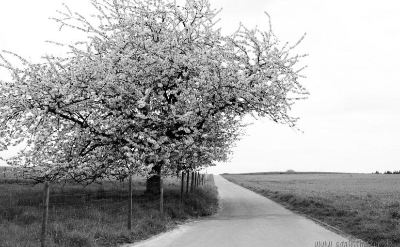 Bergische Streifzüge: Der Obstweg