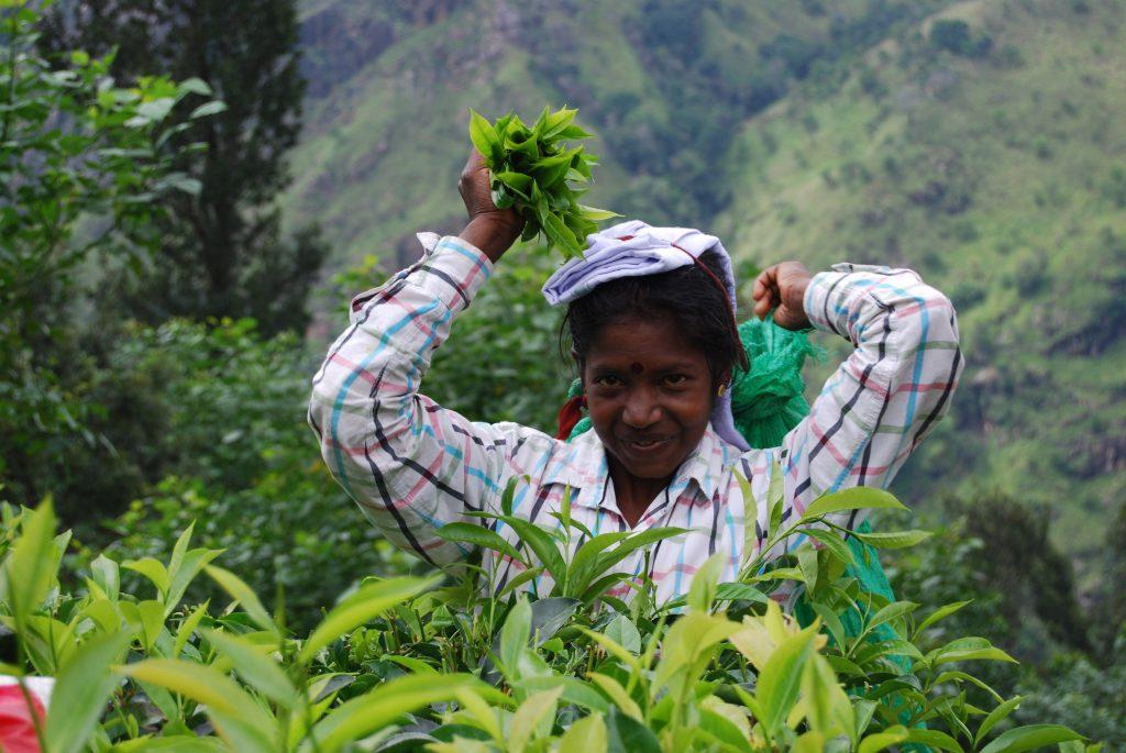 Sri Lanka: Auf den Spuren des Ceylon-Tees